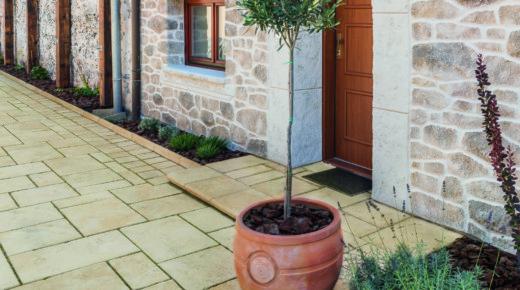 roślina w donicy na tle domu z kamienną elewacją